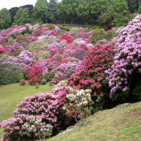 Prenota la tua visita al Parco Burcina